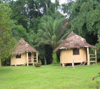 La végétation , Faune et Flore de mon beau pays la Côte d'Ivoire.