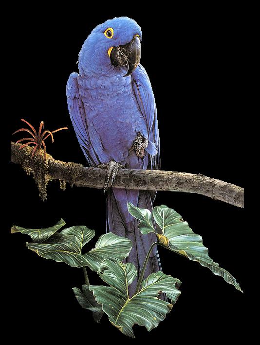"""BIRDS-OF-PARADISE"""