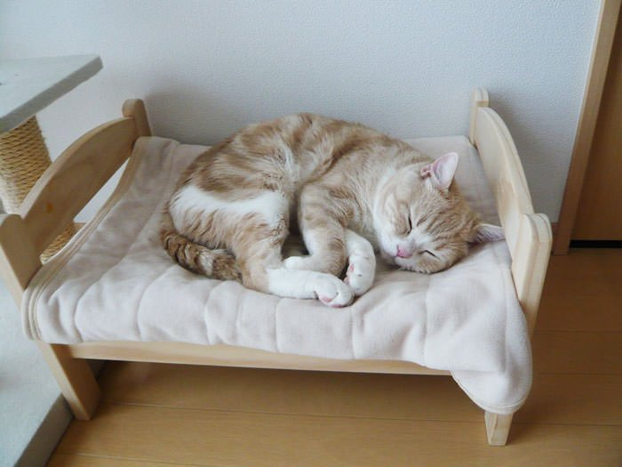 """PETITS LITS  IKEA POUR CHATS"""