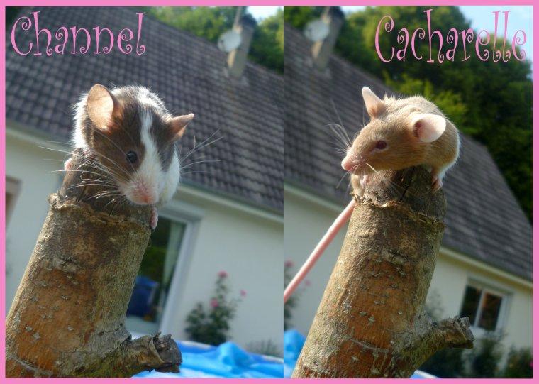 Les petites souris :)