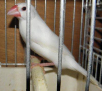 PADDA 2011
