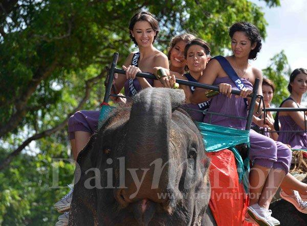 Aventure Miss France : Visites à dos d'éléphant et safari