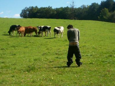 mon cul et les vaches