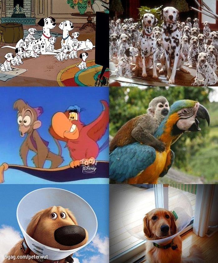 Les animaux Disney/Pixar , en vrai ? Profitez ! ♡
