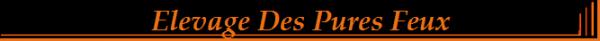 Hyron  super Etalon Disponible pour Saillie  www.chenildespuresfeux.com