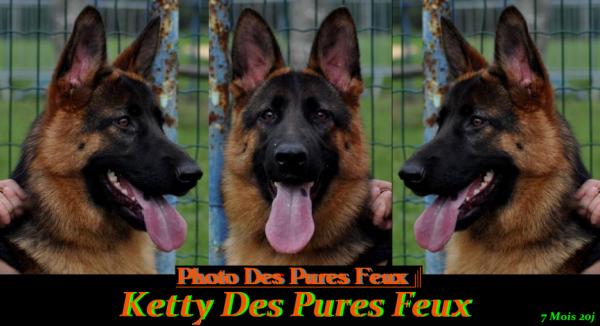 Ketty Des Pures Feux à 9 mois  www.chenildespuresfeux.com