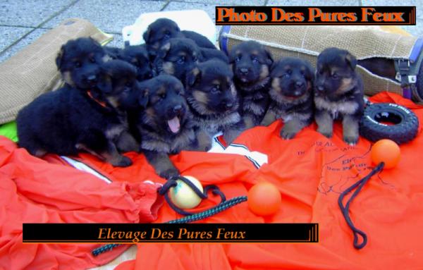 www.chenildespuresfeux.com