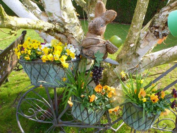 Mon Jardin Fleuri Au Printemps Jolie Nature
