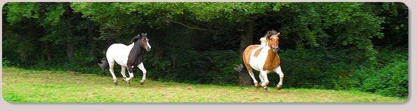 Bienvenue sur le blog de mes deux chevaux ; Tessy & Balou ♥ « Mon rêve d'enfance s'est réaliser, et ce n'est pas prêt de s'arrêter! ♥ T&B&J, c'est bien pour toute la vie! ♥ »