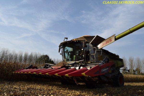 Lexion 770 au maïs