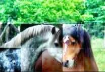 Blog de PUB-blog-animauxx