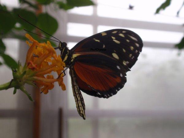 # J'ai des Butterfly, des Papillons en pagaille ♪