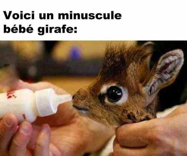 tout mimi ma petite girafe on ne peu que l'aimé
