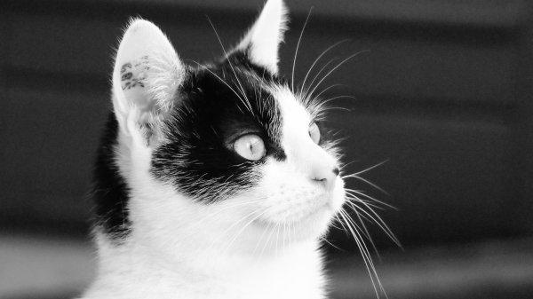 Mon p'tit chat