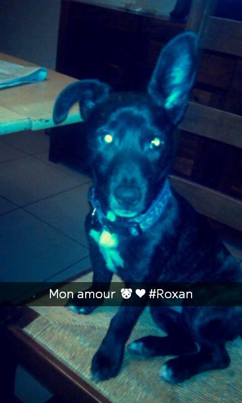 Ma puce tu me manque tellement je t'aime #Roxanne