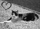Photo de Cats-Cannelle