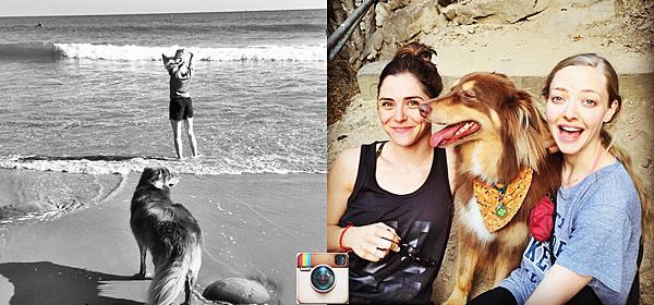 21 Octobre 2014 :  Amanda a été vu avec son chien Flynn faisant du shopping.