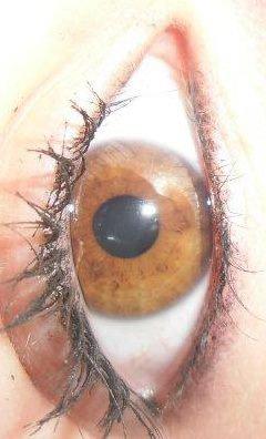 Mes yeux . (L)