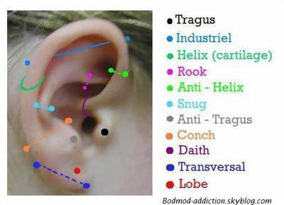 Les différents enlacements ( oreilles/ visage/ corps )