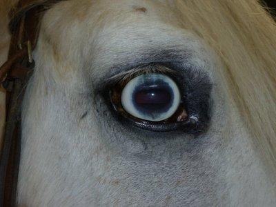 La jument au yeux bleu