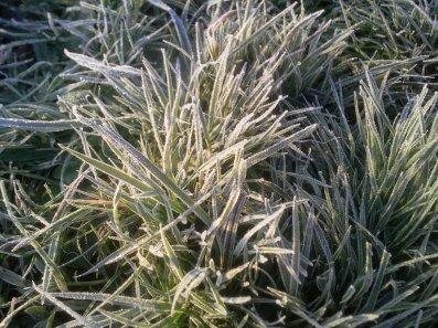 Les gelées blanches