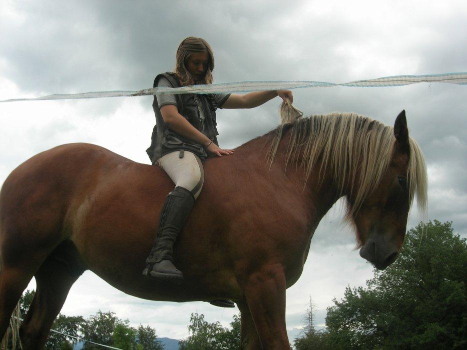 ° ° ° Voici un Blog principalement consacré à mon cheval Comtois, Loupio et à sa progression depuis notre rencontre° ° °