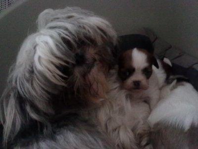 Zoèy & Scooby - Le 11.11.2010
