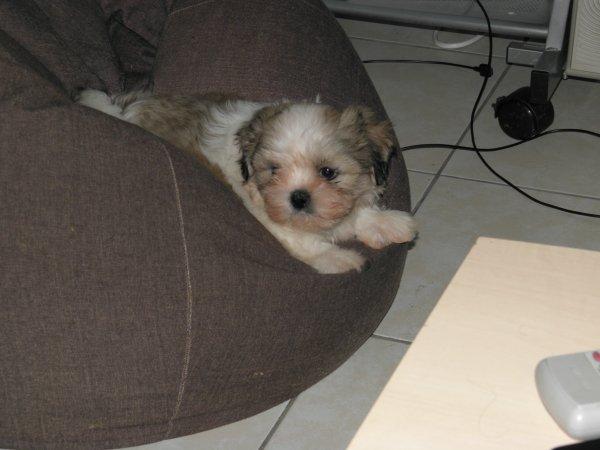 Zoèy & Scooby 13.12.2010