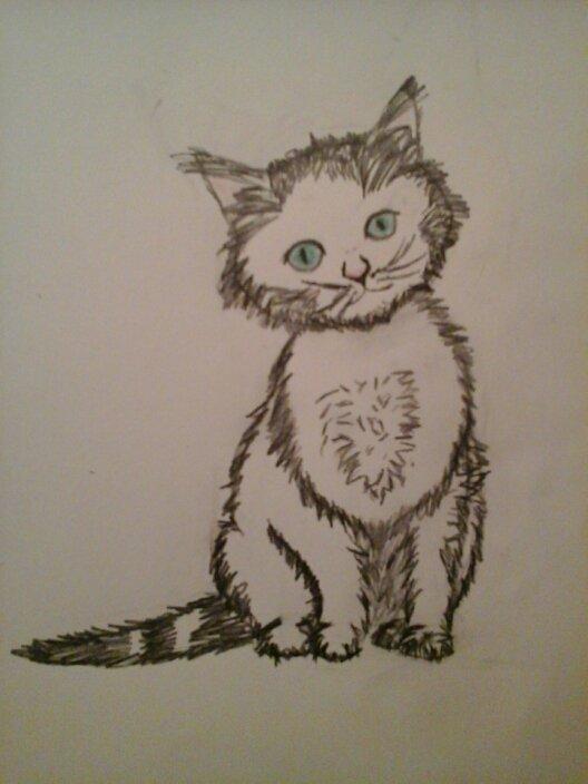 Chat au crayon de papier