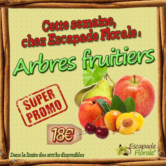 Promo sur les Arbres Fruitiers