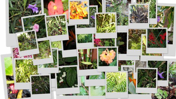 Granma's garden :)