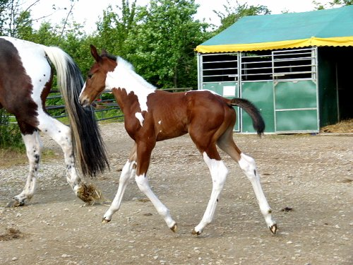 Le bébé de Sweetpie à 6 jours !