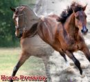 Photo de Horse-Dressing