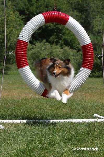 Quel est votre sport équestre et canin préféré ?! :)