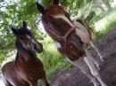 Photo de chevauxpassion63880