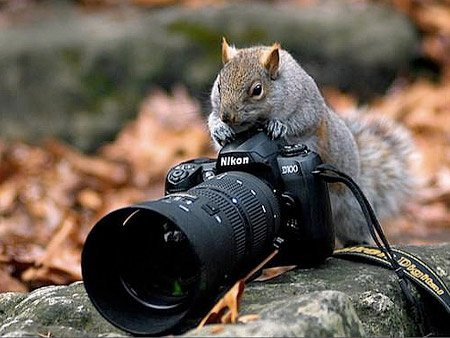 Animals Using and Playing with Cameras - SchoolandUniversity's Photography