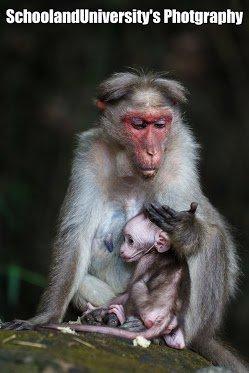 Motherhood - SchoolandUniversity's Photography