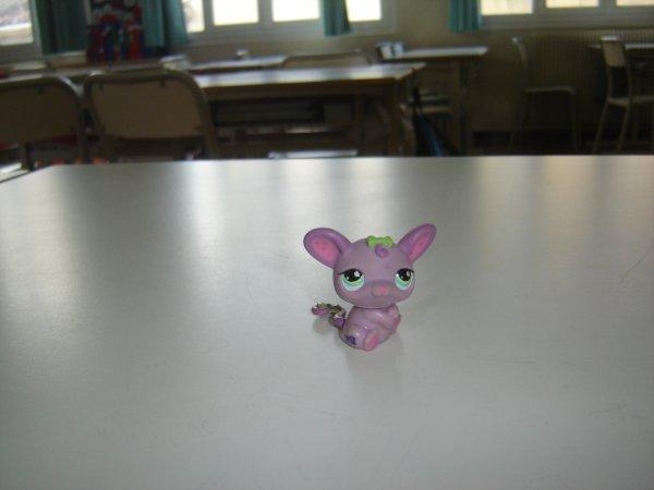 Petshop dans ma classe !