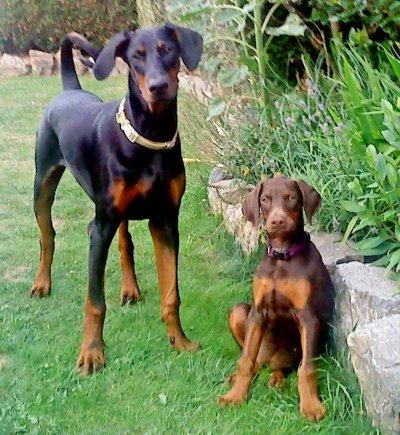le grand frère et la petite soeur