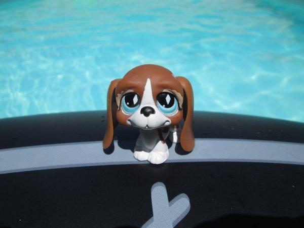 Petit résumé de la piscine !