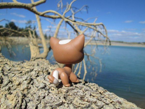 Photo au lac 3