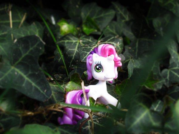 I'm a unicorn !