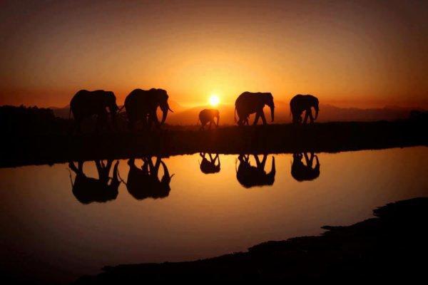 Elephantomme :ppp