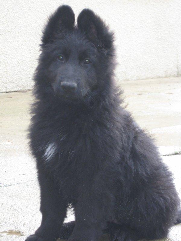 Voulka à deux mois !