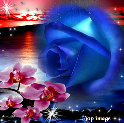 rose bleue et orchidées