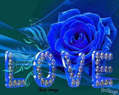 magnifique rose bleue