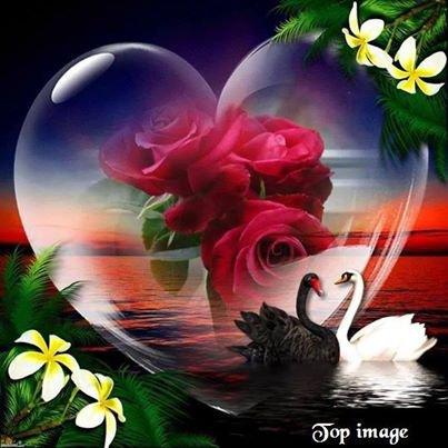 roses dans un coeur
