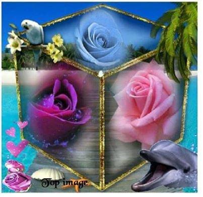boite à roses