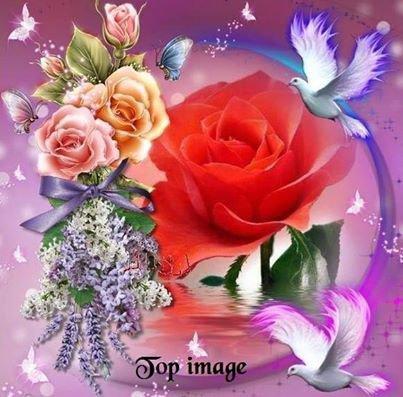 colombes avec des roses