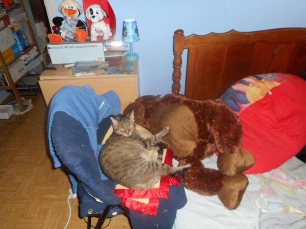 déjà 27 semaine que tu es partie mémère - Hommage as mémère une de mais chatte décède